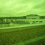 Dach in grasgrün