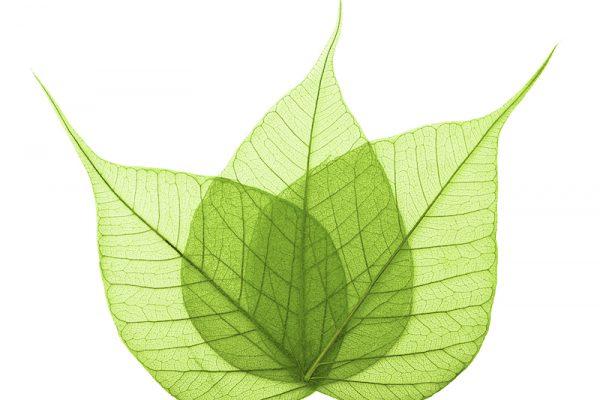 Einwendungsausschluss, Umweltrecht