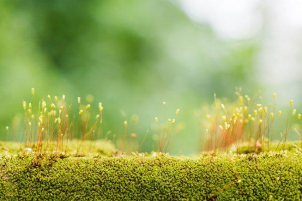Ausweitung des Rechtsschutzes im Umweltrecht